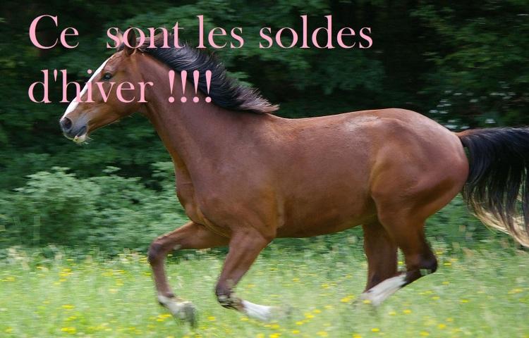horse_gallop_animal.jpg