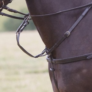 collier-de-chasse-5-points-shires.jpg