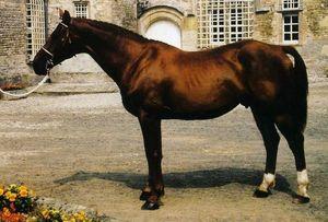Horse_Lieu_de_Rampan.jpg